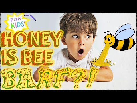BEE BARF?! All About HONEY [A Video for Kids!]