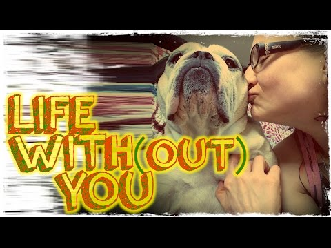 Life With(out) You | The Story of Ooby The Bulldog