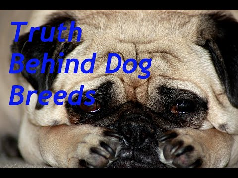 The Truth Behind Dog Breeds and Shows