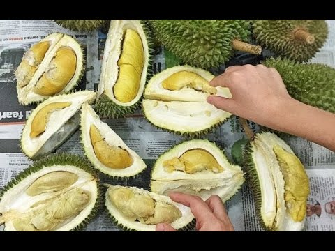 Durian in Penang. Malaysia! Super high quality Durian Feast!