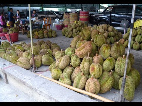 BIGGEST DURIAN VENDOR EVER!! - FRUITARIAN RAW VEGAN