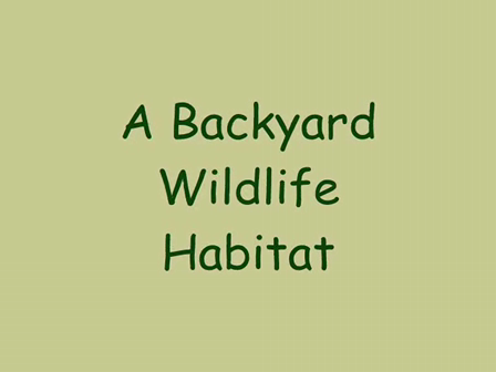 A Child's First Connection to Nature: The Back Yard