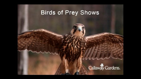 Birds of Prey Interview at Callaway Gardens
