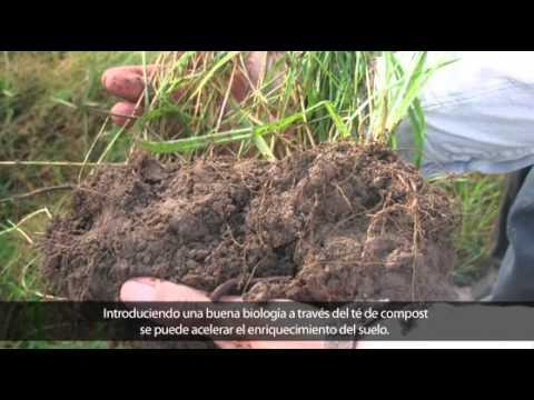 Agricultura Regenerativa/Agriculture Regeneration