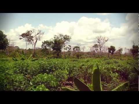 Tierra Vida - An Ayahuasca Journey