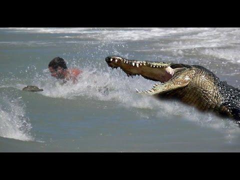 Crocodile Chases Swimmer