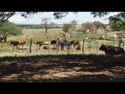 Namibia: Grundeinkommen für alle   Global 3000