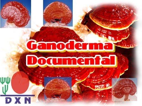 GANODERMA - Documental 2014 | DXN la compañía de Ganoderma un mundo un mercado
