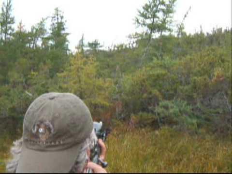Awesome Newfoundland Moose Hunt