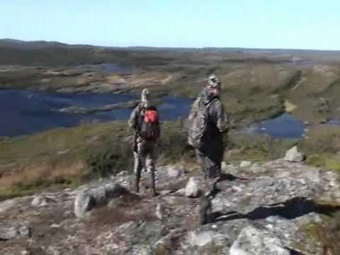 A Newfoundland Bear Hunt