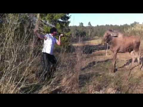 Man Shows Moose Who's Boss
