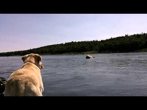 Salmon Fishing Adventures on the Exploits 2012