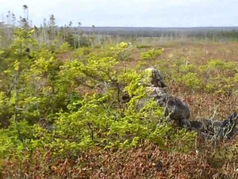 coyote hunting 2011 may 04
