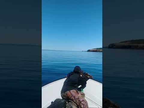 Seal hunting in Newfoundland