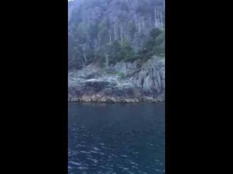 Bald Eagle picks up a fish.