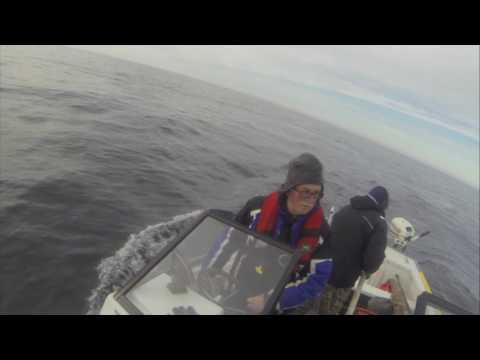 Turr Hunt - Nov 2016 - Fogo Island, NL(Rich Reeves)
