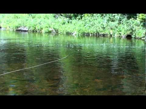 Salmon taking a Dry fly