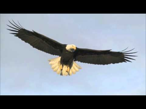 Come Soar with Me