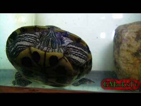 """GMark's tv (Video Of My Turtle) Episode 2 """"2010"""""""