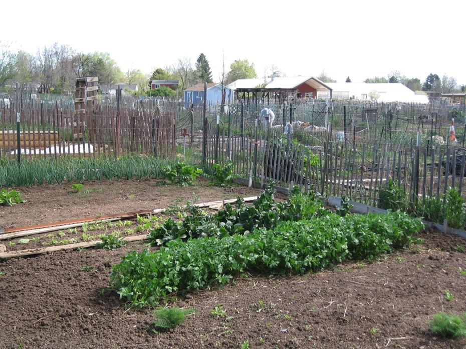 So it begins...community gardening
