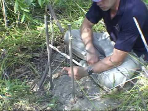 How to make a primitive trap: the t-bar snare (wilderness survival traps)