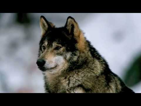 The Mummers Dance - Loreena McKennit - Wolf )( Loup