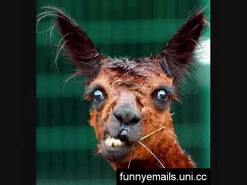 Funniest Animals EVER!