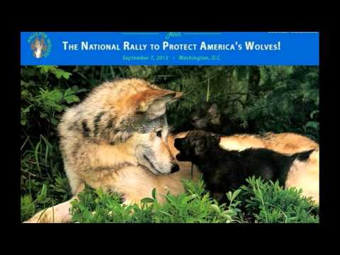 The National Rally to Protect America's Wolves (Official)