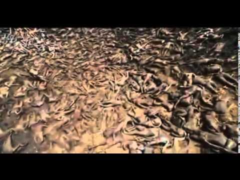 Apocalypto 2006full movie 360p