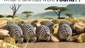 What if animals were ROUND?