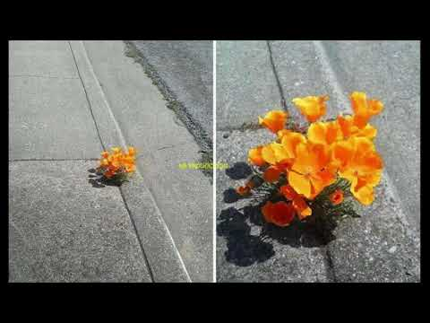 Nature Always Finds A Way...Never Give Up!!