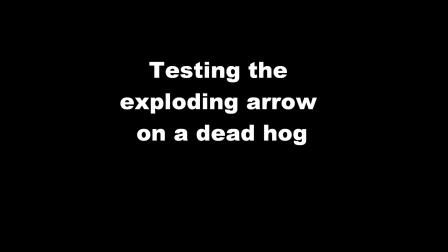 Exploding Arrow on Hog