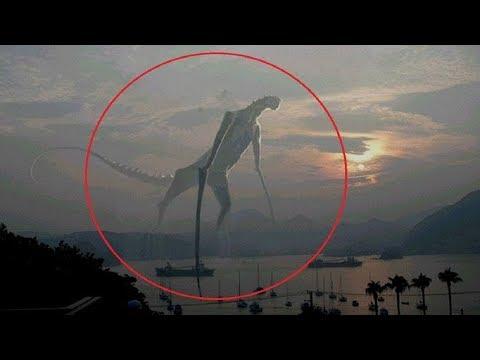 5 Misteriosas Criaturas Captadas en Camara y Vistas en La Vida Real!   Mundo Misterio Tops