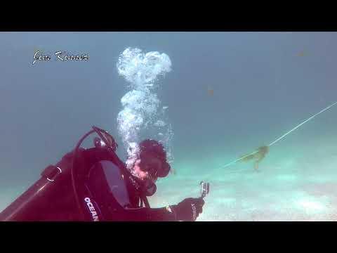 Muskie Attacks Scuba Diver
