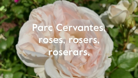 Parc Cervantes, roses, rosers, roserars, 13