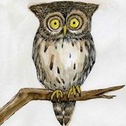 Silent Silver Moon Owl
