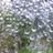 istocaci cecilia