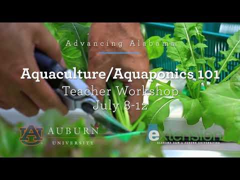 Aquaponics  workshop for teachers