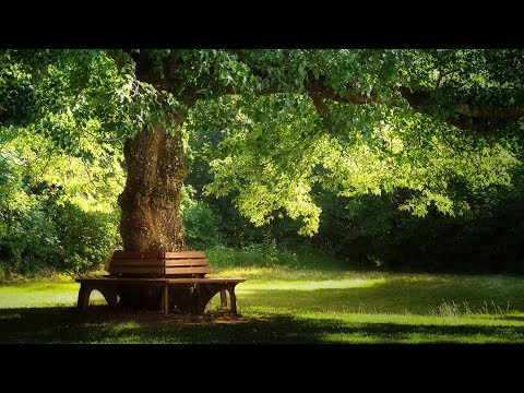 VÍDEO-MÚSICA para RELAXAR : Sons de Floresta / Jardins - Pachelbel