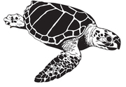 Loggerhead Marinelife Center Presents Recycling Is an Art