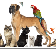 Blessing of the Animals at St Joseph's Episcopal Church