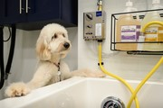 Free Dog Grooming for School Employees