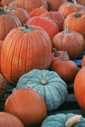 Pumpkin Patch at Cason United Methodist Church