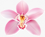 Boca Raton Garden Cllub: Still Scared to Mount Your Orchid?