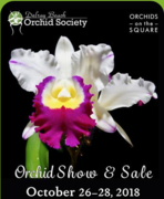 Orchids on the Square: Delray Beach Orchid Society Annual Show and Sale