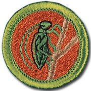 Boy Scout Insect Study Merit Badge Workshop