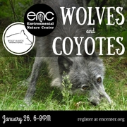 Wolves, Coyotes and Wildife
