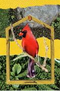 Bird collages