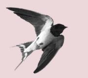 """The Swallows Nest Studio - Festival Exhibition"""