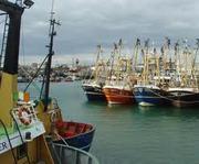 SEPA Paintout - Kilmore Quay - Sunday July 14th -11am onward